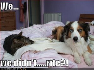 loldogs-cute-dog-pictres-cat-and-dog1